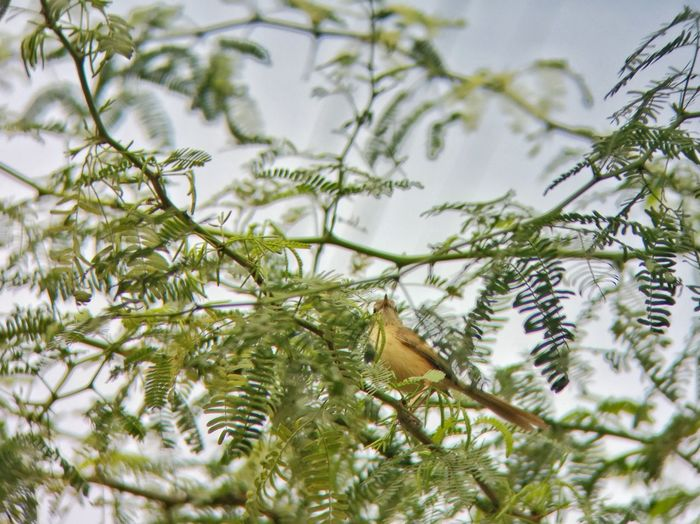 beauty Sunbird Mobilephotography Okhla Okhlabirdsanctuary Tree Winter Weather Nature Branch Pinaceae Pine Tree Cold Temperature No People Beauty In Nature Outdoors Sky Close-up Day