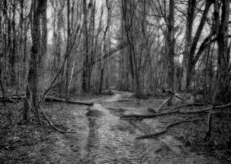 WelwynGardenCity Commonswood Black & White HDR Winter Walking Around Early Morning