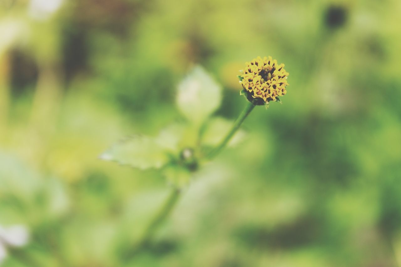 nature, growth, flower, plant, beauty in nature, fragility, petal, close-up, outdoors, no people, flower head, day, blooming, freshness