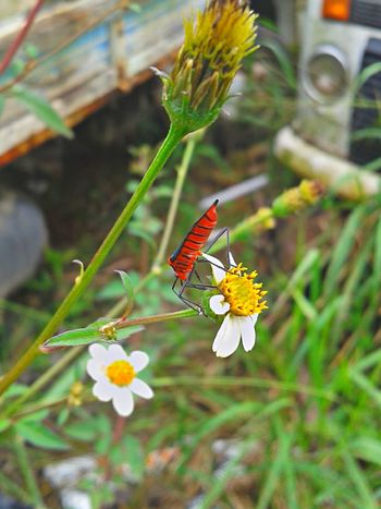 As coisa de Deus são perfeitas Beauty In Nature Brasil ♥ Coisa De Deus Coisa De Deus Natureza Perfeita Flower Insetosdobrasil Peruíbe Pollination