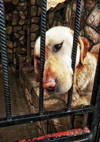 I want out so i can get some love Dogs Dogslife Doglover Macedonia Macedonian Pets Travels Travel Destinations Bitola  Balkans Balkans Europe Love Animal Themes One Animal Domestic Animals Cage Mammal No People Close-up Outdoors Day Nature