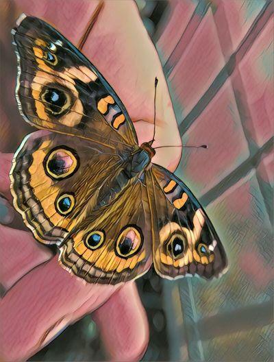 Butterfly North Carolina Butterfly Butterfly