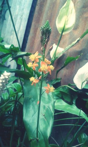 Flower Plant Day EyeEmNewHere ♥
