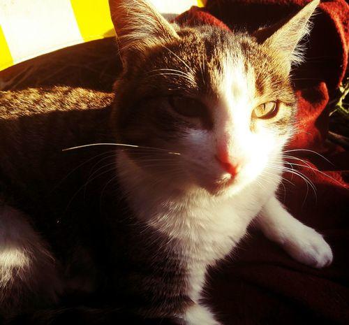 Cat Cat Lovers Cat Eyes Sun Love Animals