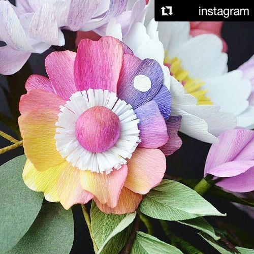 Reposted Flower Flower Head Paperflower🌷 Live For The Story