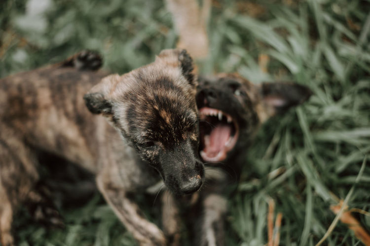 Dogs Animal Themes Animal Mammal One Animal Animals In The Wild Animal Wildlife Animal Body Part Vertebrate No People Mouth Open Mouth Nature Day Plant Emotion Anger Land Close-up Grass Outdoors Aggression  Animal Head  Animal Teeth Animal Mouth