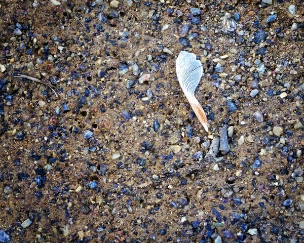 promises, promises. Nature Seed Sand Pebbles Textures And Surfaces Alone Backgrounds The Great Outdoors - 2016 EyeEm Awards A Bird's Eye View