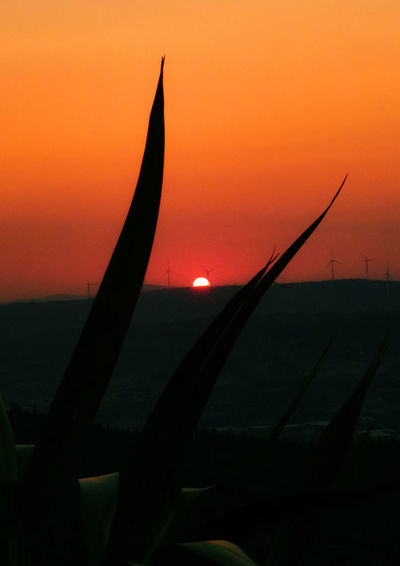 Sunset_collectio