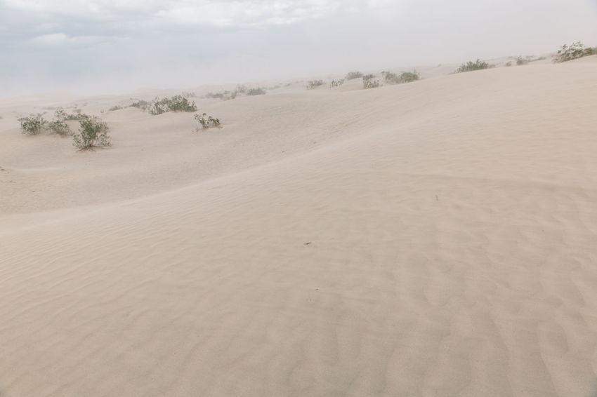 Arid Climate Arid Landscape Beach Beauty In Nature Day Death Valley Death Valley National Park Desert Desert Dunes Landscape Nature No People Outdoors Sand Sand Dune Sand Storm Scenics Sky Storm Tranquil Scene Tranquility Tree