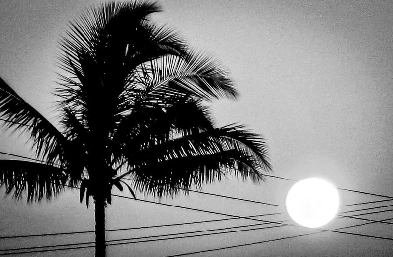 Palm Tree Electricity  Tree Cable Low Angle View Silhouette No People Nature Growth Beauty In Nature Sky Outdoors Day Sunrise Kauai Hawaii