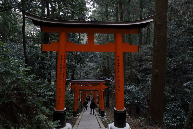 Japan Japan Photography Japanese Culture Japanese Temple Religion And Tradition Tranquility TreePorn Trees Architecture Built Structure Forest Nature Nature_collection Outdoors Religion Religion And Beliefs Religious Architecture Spirituality Temple Temple - Building Temple Architecture The Way Forward Tranquil Scene Tree Tree_collection