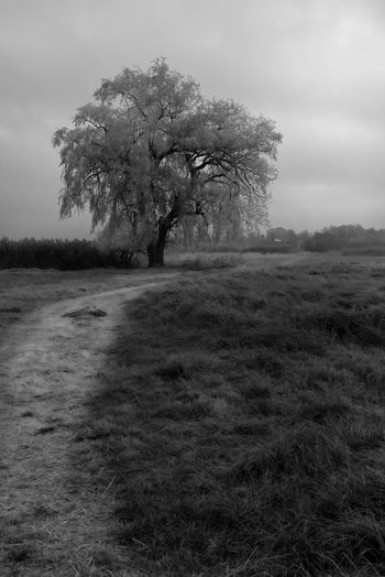 tree on the way Tree Plant Environment Landscape Beauty In Nature Land Field Sky Day No People Nature Tranquility Non-urban Scene Grass Tranquil Scene Outdoors Growth Blackandwhite Black And White rule of thirds Leading Foreground Focus On Foreground Dodge And Burn Landscape_photography
