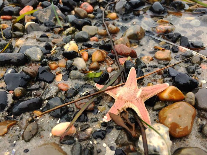 Rock Nature Day Close-up No People Starfish  Rock - Object Stone - Object Star Shape Animal Outdoors Beach Animal Wildlife Marine Seestern Angespült Leben Life Life Is A Beach Starfish At Beach
