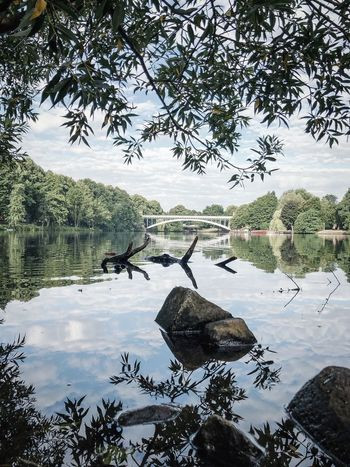 Water Tree Plant Reflection Lake Nature No People Scenics - Nature Beauty In Nature Tranquil Scene Day Tranquility Outdoors Sky Waterfront Growth Cloud - Sky Non-urban Scene Branch