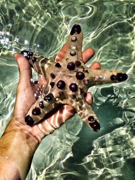 Starfish  Starfish At Beach Sea Creature StarfishBeSoCute
