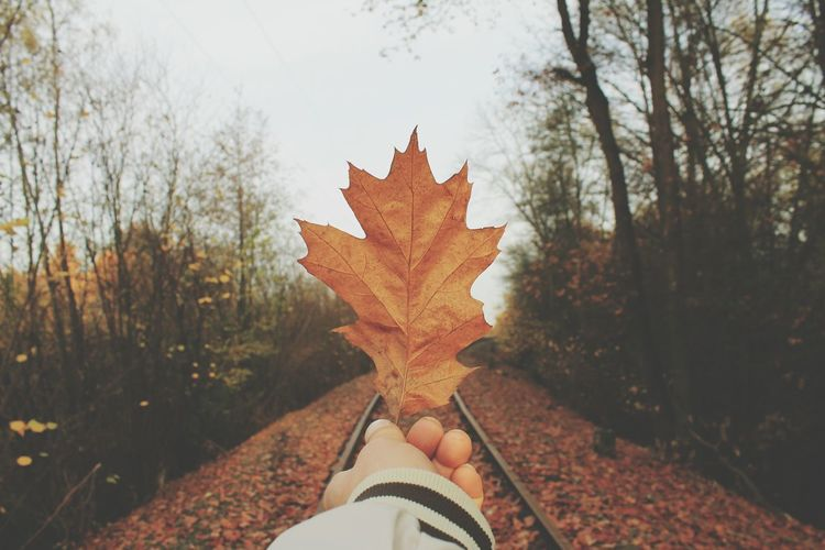 Point Of View From My Point Of View Leading Lines Nature Photography Nature_collection Autumn 2015 Autumn Collection Autumn🍁🍁🍁 Autumn Leaves Autumn Colors Autumn Train Tracks Glitch Twilight The Beauty Of Fall Beautiful Nature Colors Of Autumn Evrything In Its Place Learn & Shoot: Leading Lines The Great Outdoors - 2015 EyeEm Awards Pattern Pieces Self Portrait Around The World Showcase: November Macro Beauty Bruchmühlbach-Miesau