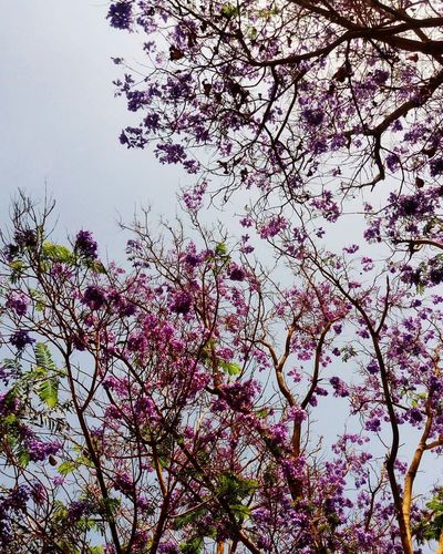 Tree Beauty In Nature Nature Day Close-up Freshness No People Outdoors Flower Low Angle View Sky Scenics Cityscape First Eyeem Photo Nature Mobilephotography Photography Cats Of EyeEm Streetphotography Alexandria Egypt Cairo Egypt