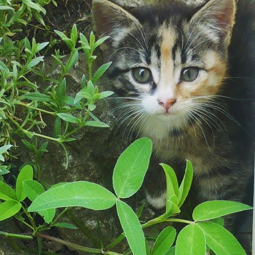 Kitty Cat Baby Cute nature colors