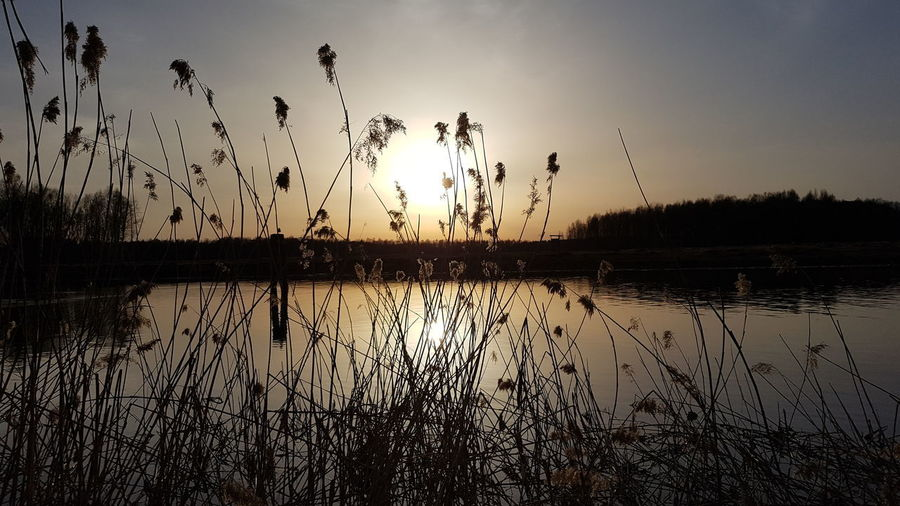 Silhouette plants by lake against sky during sunset