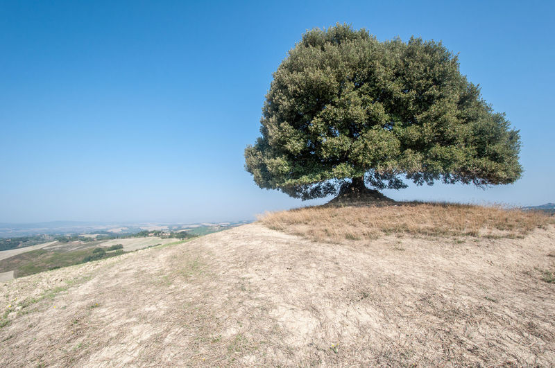 Tree on landscape against clear blue sky