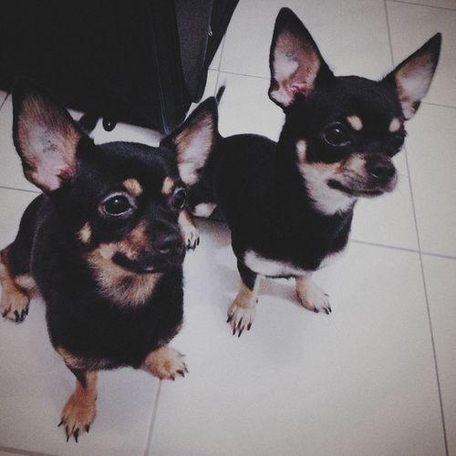 Nocha & Nacho