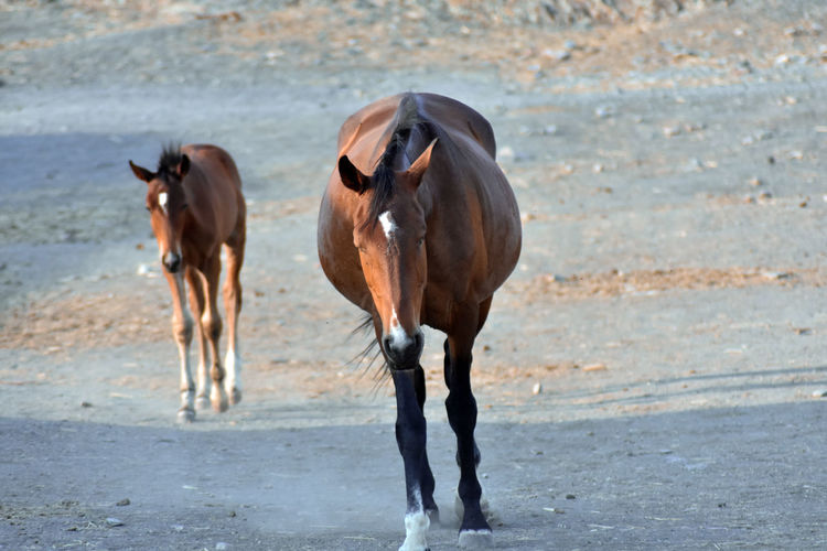 Horses running in the ground