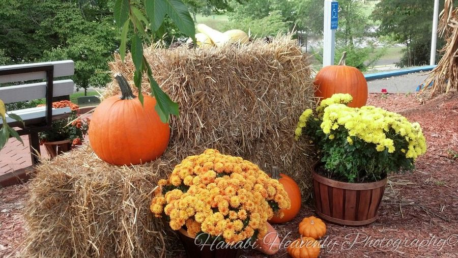 I just LOVE autumn and everyone being so festive for Halloween (*^ω^*) Autumn Colors Autumn Festive Westvirginia