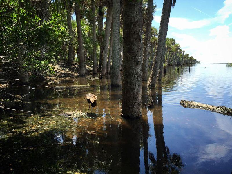 Blue Cypress Lake Blue Cypress Lake Florida Nature St Johns River Florida Nature Palm Trees