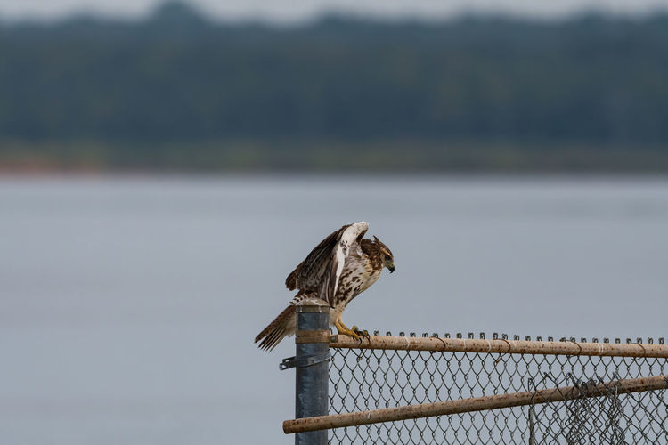Bird perching on a fence against the sky