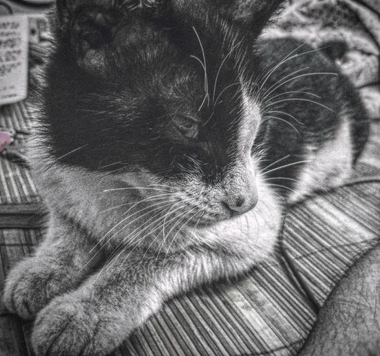Domestic Cat Domestic Animals Pets Animal Themes One Animal Indoors  Mammal No People Feline Close-up Day Portrait