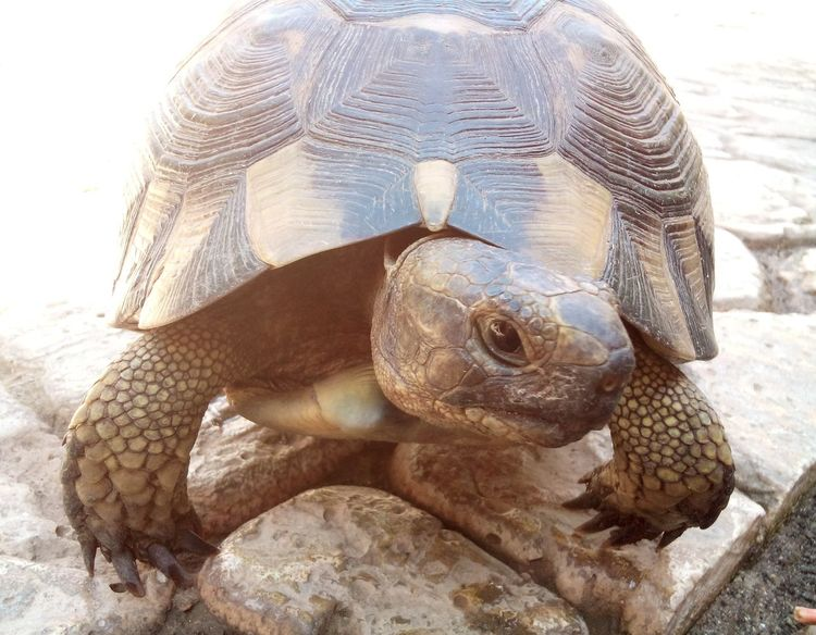 One Animal Tortoise Reptile Animals In The Wild Animal Themes Tortoise Shell Day Animal Wildlife Outdoors Nature Close-up No People Sea Life