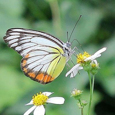 Butterflys Butterfly Ig_butterflies Macroworld_tr Uwn_macro Macro_x Macro_holics Igglobalclubmacro Bns_macro Nice Cool Awesome Photooftheday