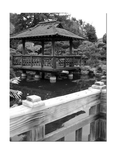 Japanese Garden 2 Hayward, Ca. Japanese Gardens Gazebo Tea House Koi Pond Reflection Reflections In The Water Shadows Footbridge Notched Wood Recessed Nails & Fasteners Aged & No Stains Manicured Trees & Schrubs Landscape Simulates Traditional Japanese Garden Native California Plants & Stones Landscape Monochrome Lovers Monochrome Black & White Black & White Photography Black And White Black And White Collection  Evergreen Trees Landscape_Collection Koi Garden Design: Kimo Kimura Landscape_photography Tranquil Scene