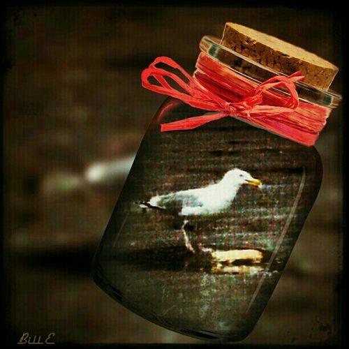 A Bottle Of Bird...