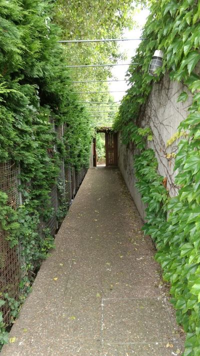 Architecture Built Structure Door Plant The Way Forward Tranquility Tree Walkway