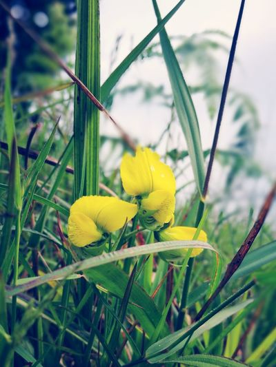 He He He Nature Plant Growth Outdoors Leaf Close-up Yellow Day No People Beauty In Nature Flower Freshness Grass Tree Sky