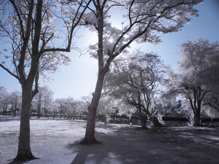 Trees in park during winter