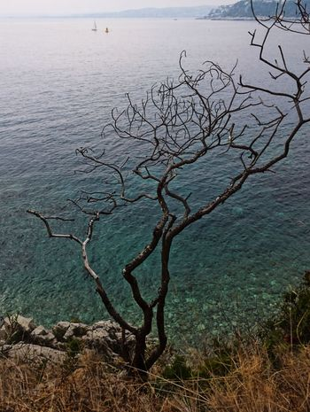 Water Sea Nature Beauty In Nature Tranquil Scene Tranquility Scenics Outdoors Côte D'Azur Landscape Landscape_Collection EyeEm Landscape EyeEm Nature Lover Mediterranean  Autumn Tree No Leaves Tree Without Leaves