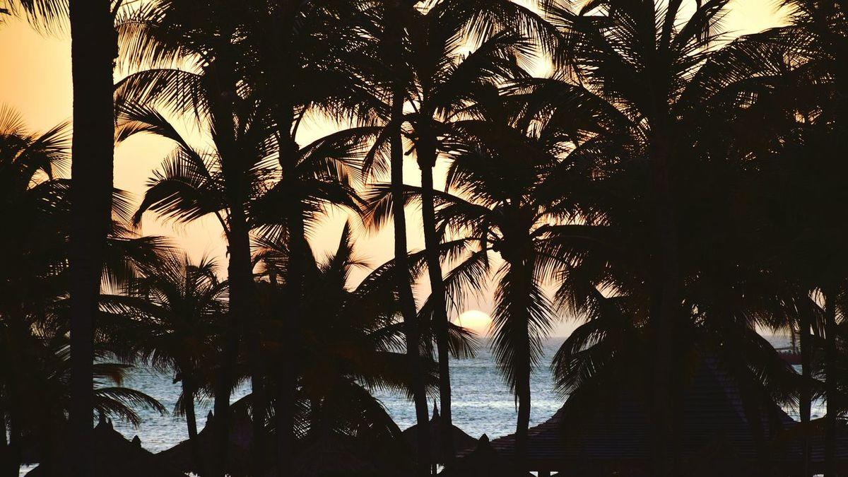 Aruba Sunset Palm Trees