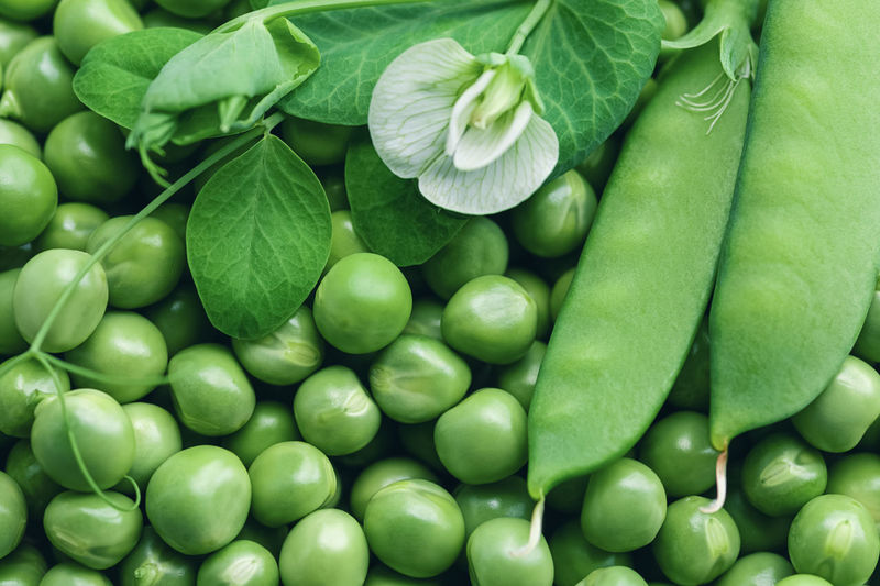 Green peas background with flower and pod