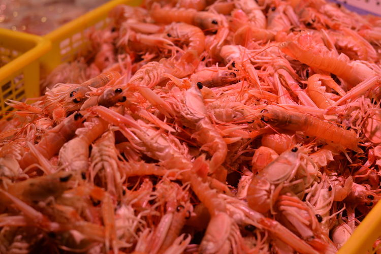 Fresh prawns for sale