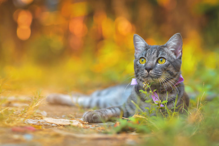 Portrait of a cat on a field