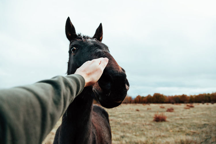 Cropped hand of man touching horse against sky