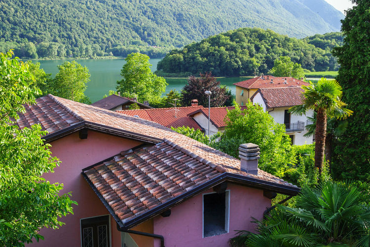Green Houses Lombardy Palm Tree Pink Trees Vacations Built Structure Day Italian Italy Lake Pianozes Mountain No People Outdoors Piano Di Porlezza Roofs Summer Sun Vacation Water