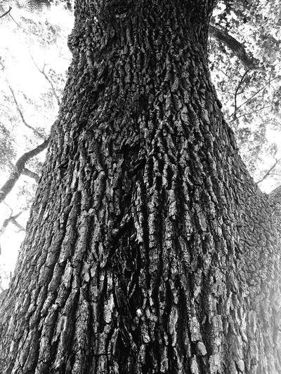 tree B&w Park