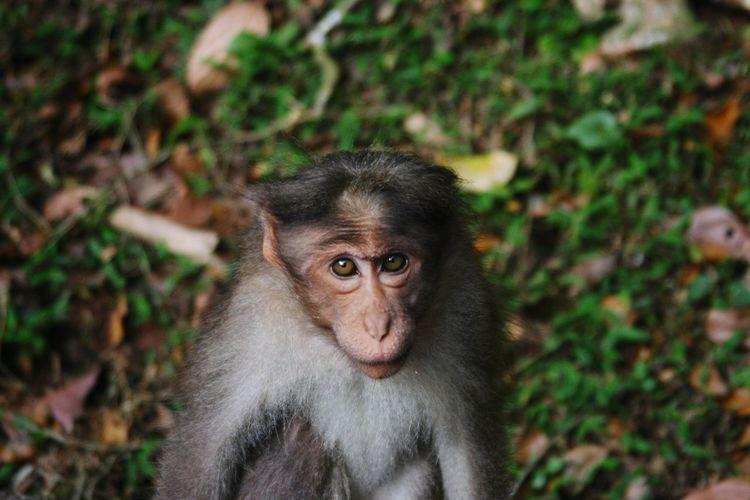 'street smart'.... monkey business