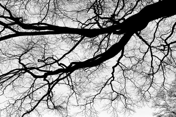 Tree Branch Low Angle View Nature Sky No People Bare Tree Outdoors Growth Beauty In Nature Close-up Day Landscape My Year My View Monochrome Photography Tranquility Grey Scotland North Berwick Scenics Black And White My Year My View