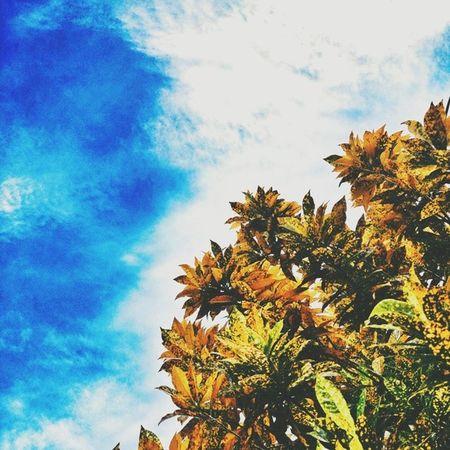 Plant it high. // VSCO Vscocam Vscogang Vscophile VSCOPH Vscogood Vsco_images Vsco_masters Vscostyle Vscobest Vscoviewer Vscovisuals VSCOPURE Vscoinwonderland Vsco_fine Vsco_lover Vscoaward Vsco_hub Vscocamss LitratongPinoy Wearefuntasticphilippines XperiaZonly