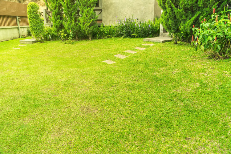 Green grass,