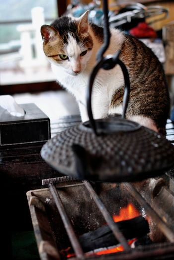 Cat By Barbecue On Table